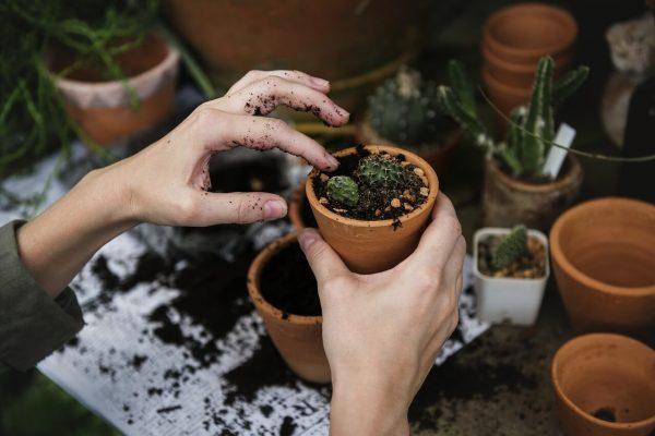 Ranger ses outils de jardinage dans un abri de jardin métal
